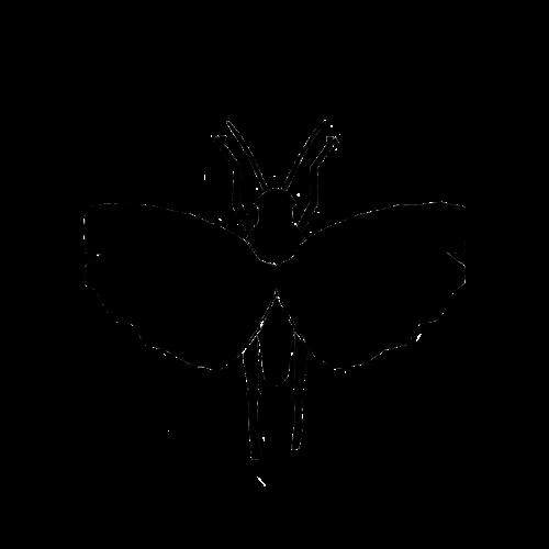 Logo Entorganics GmbH transparent